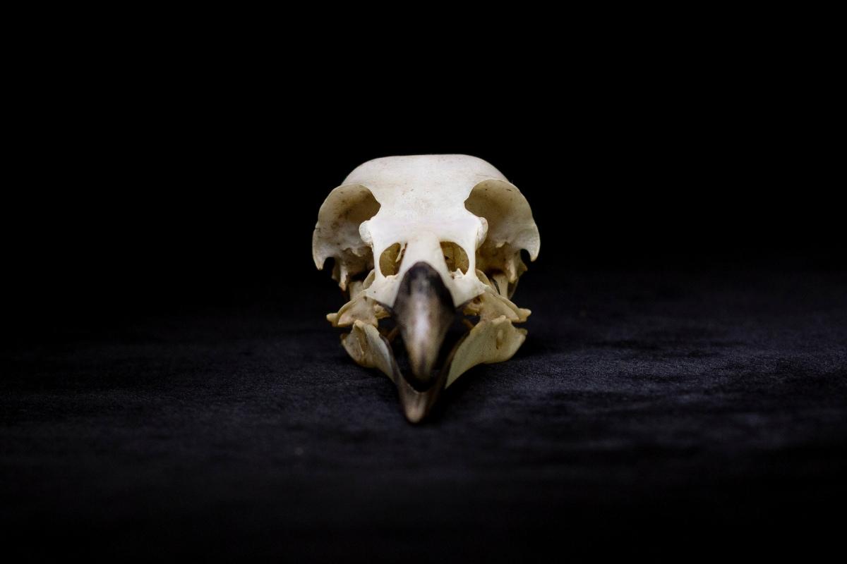 Kim V. Goldsmith Eye of the Corvus art installation