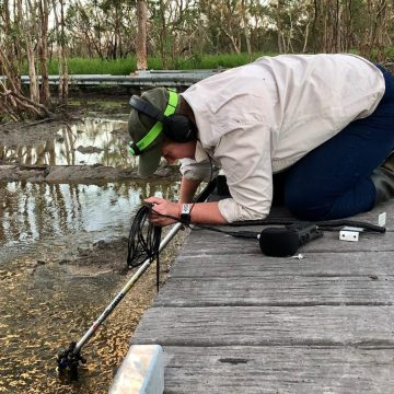 Kim V. Goldsmith audio recording in the Macquarie Marshes