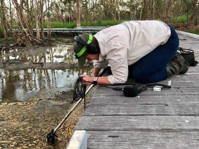 Kim V. Goldsmith audio recording in the Macquarie Marshes