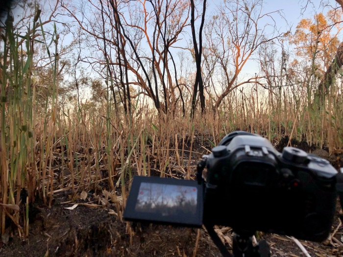 Time lapse recording a burnt out reedbed in the Macquarie Marshes (February 2020)