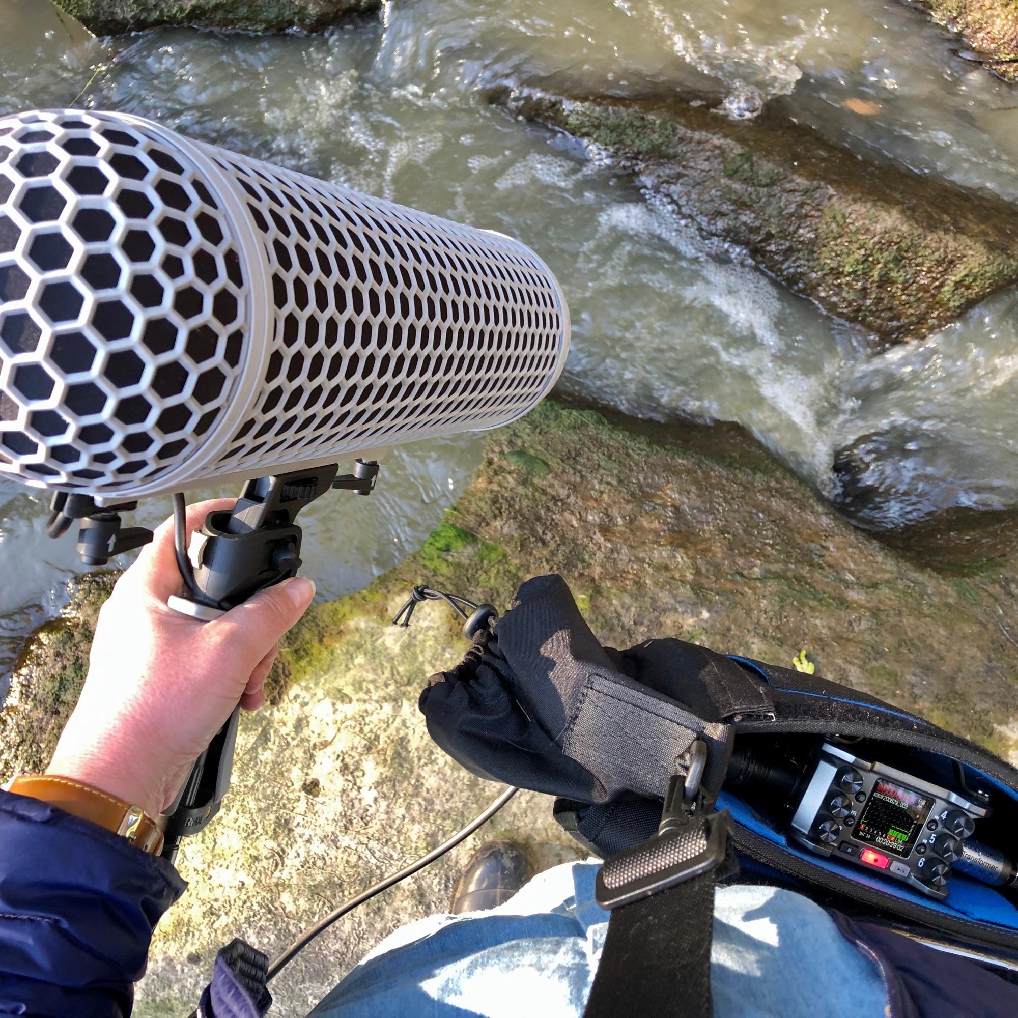 Field recording with Kim V. Goldsmith